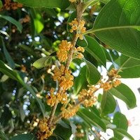 bioactive-ingredients-refresh-botanicals